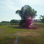 675 Redwing Dr Lake Mary Florida 32746